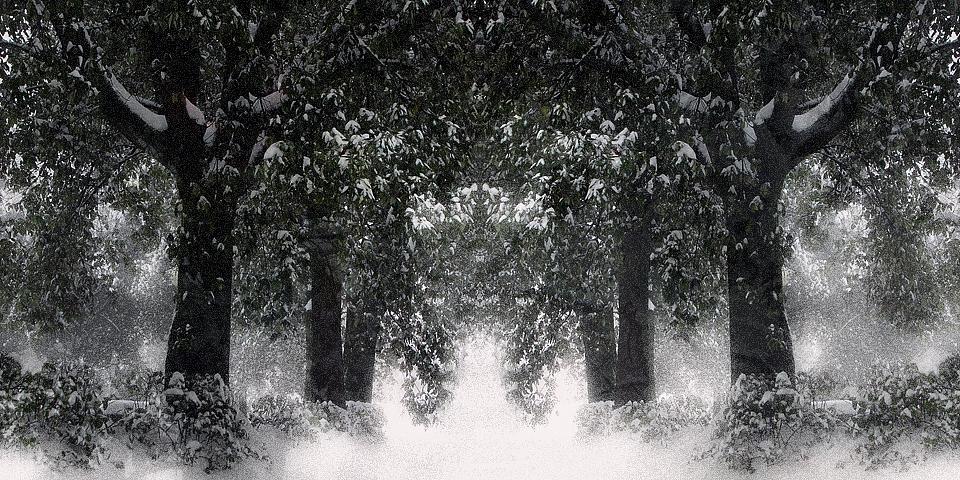 Nevicata (Natale 2010)