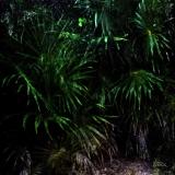 foresta001