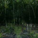 foresta002