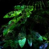 foresta008