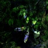 foresta009