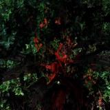 foresta011