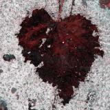 cuore_001