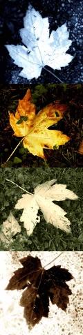 stele_foglie_AutunnoB