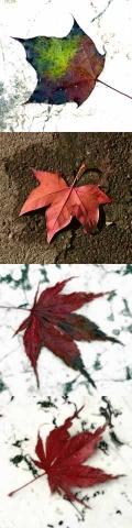 stele_foglie_AutunnoR
