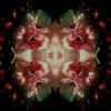 fioreangelo004v2