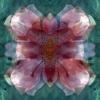 fioreangelo009