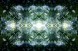 fioreangelo004v1