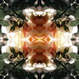 fioreangelo004v3