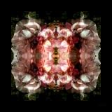 fioreangelo007