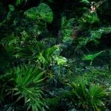 foresta010
